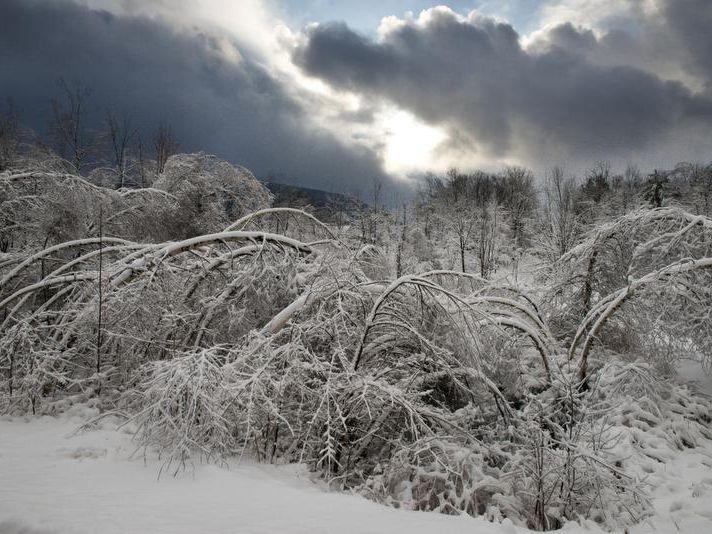 -BUR 20131227 ICE TREES GREEN C2.jpg_20131227.jpg