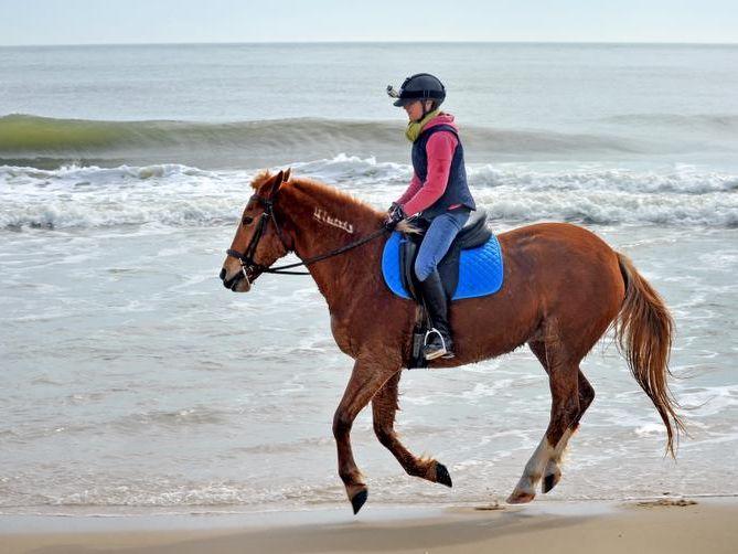 -le-BeachHorses7348.jpg_20120222.jpg
